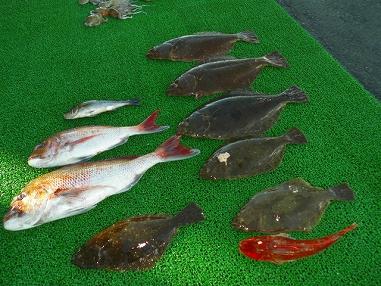 大漁 ヒラメ