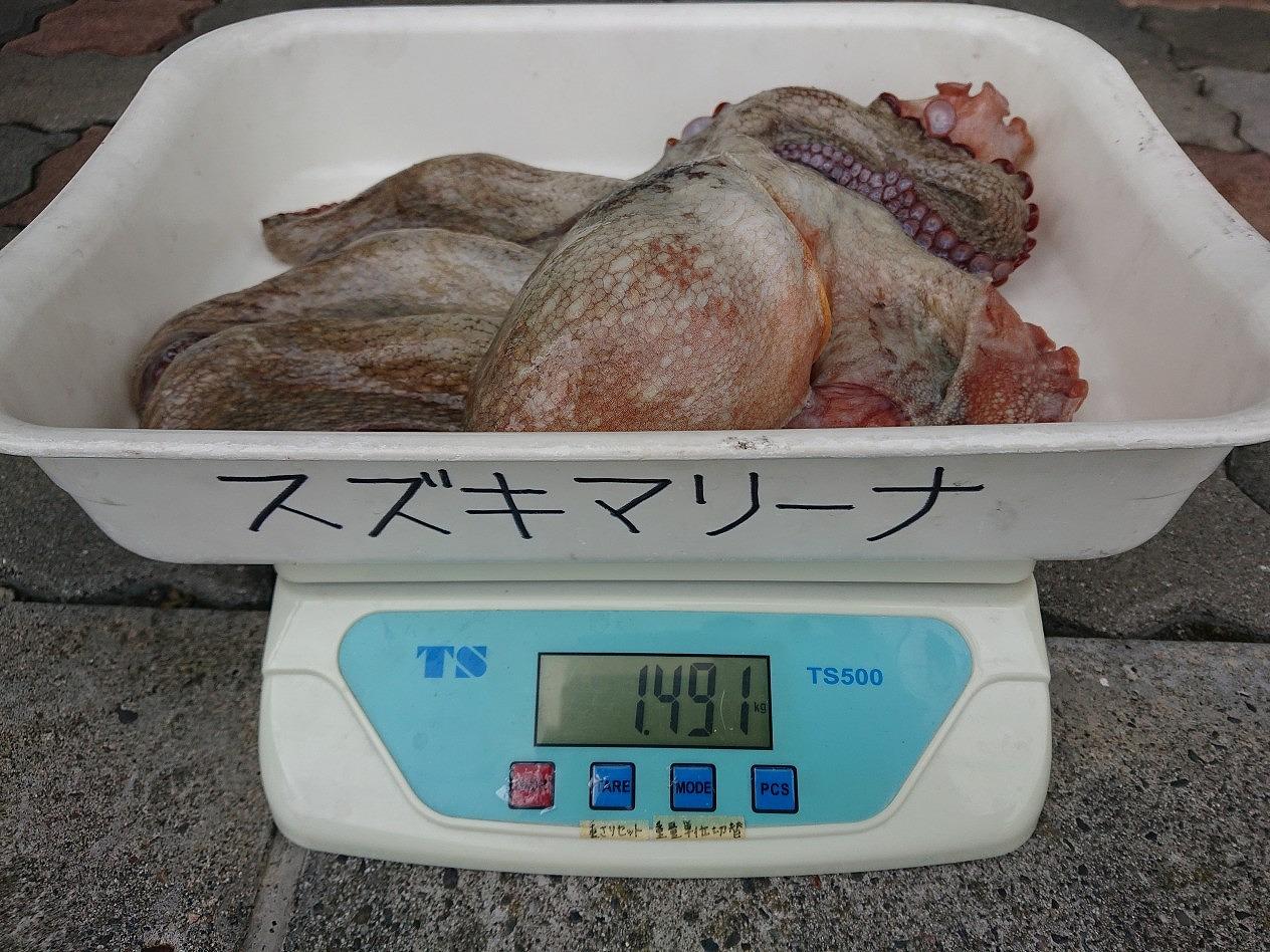 https://www.suzukimarine.co.jp/marina/hamanako/blog/img/DSC_0471.jpg