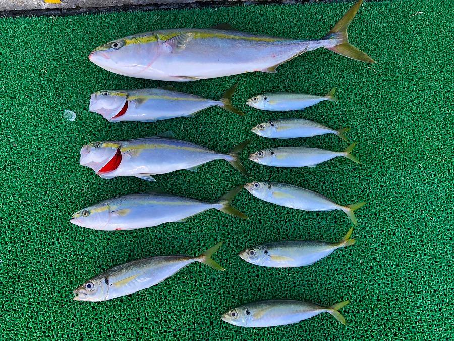 http://www.suzukimarine.co.jp/marina/hamanako/blog/img/IMG_1672.jpg