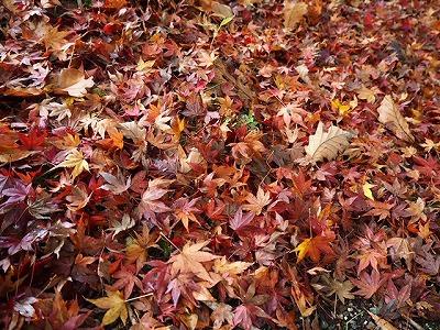 http://www.suzukimarine.co.jp/marina/hamanako/blog/img/IMG_7585.jpg
