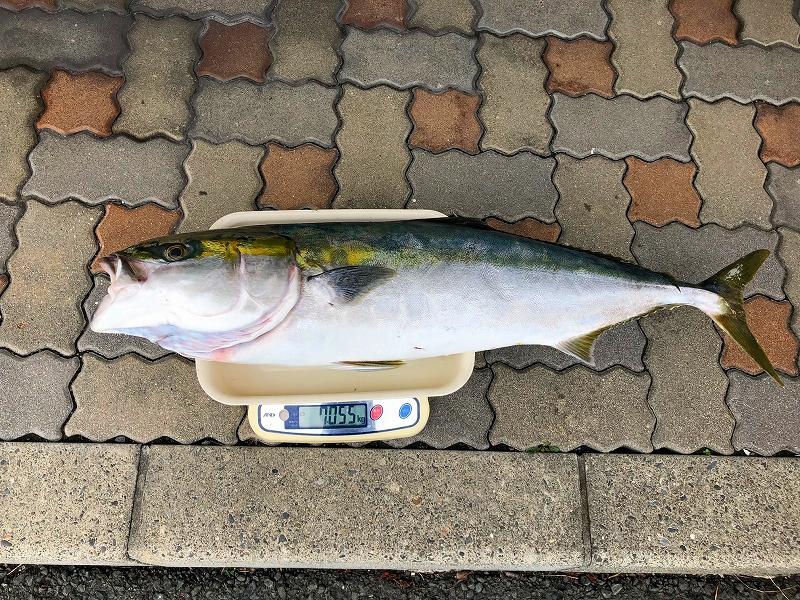 https://www.suzukimarine.co.jp/marina/hamanako/blog/img/IMG_8788.jpg
