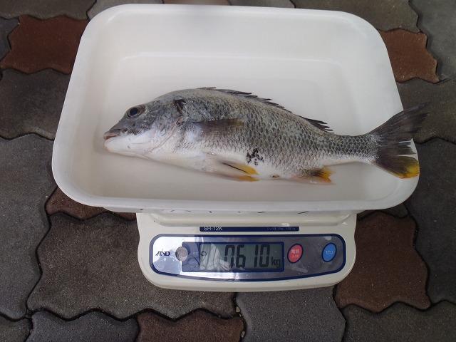 http://www.suzukimarine.co.jp/marina/hamanako/blog/img/P4180674.jpg