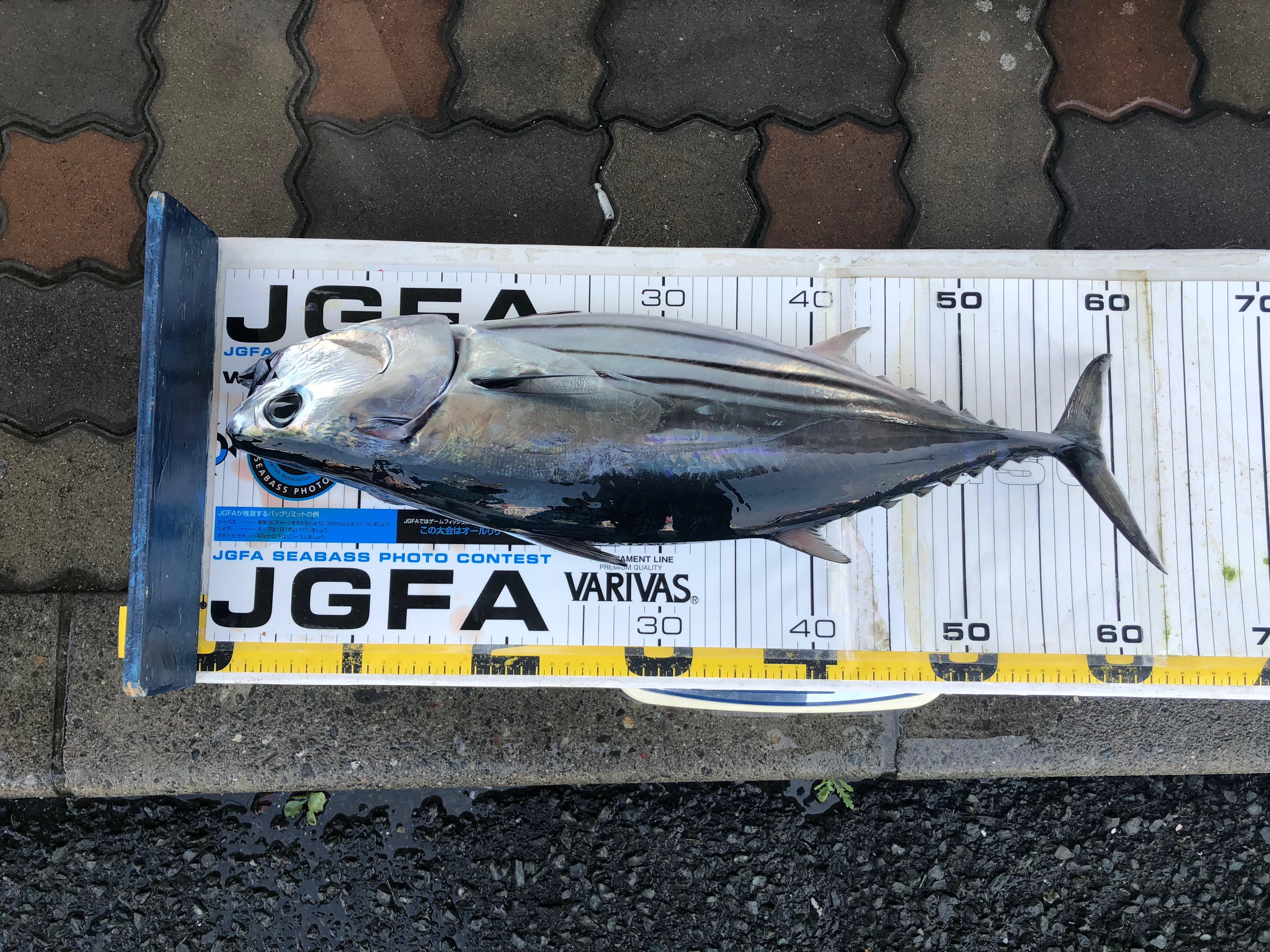 http://www.suzukimarine.co.jp/marina/hamanako/derby/2018/img/IMG-4317.JPG