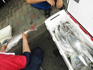ぎっしりの太刀魚のサムネイル画像