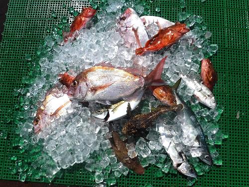 おいしくて危ない魚