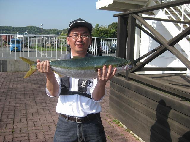 伊良湖 ハマチ