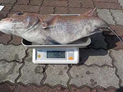 伊良湖 真鯛