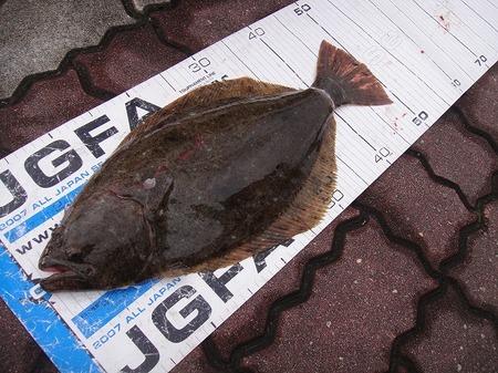 神島 ヒラメ