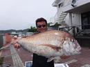 巨大 鯛 タイ