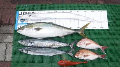伊良湖周辺 釣果