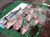 真鯛祭り.jpg