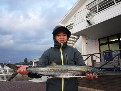 サワラ レンタルボート 冬 釣り